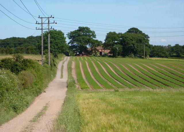 Field and track towards Crookford Farm