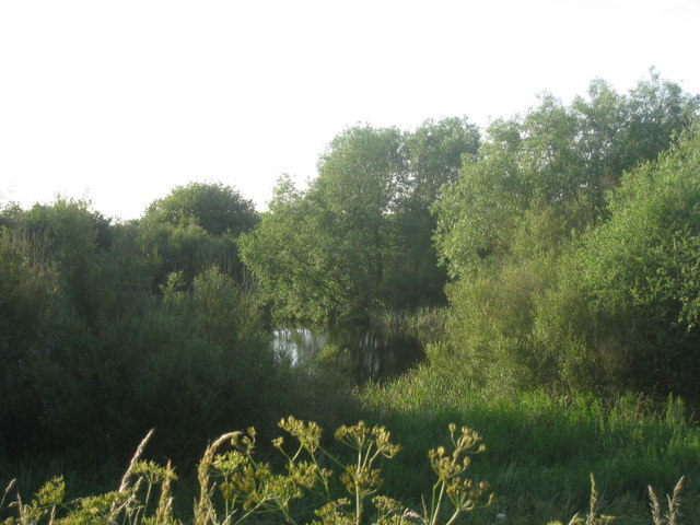 Pond and Willows