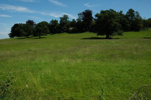 Deerings Wood, Ragley