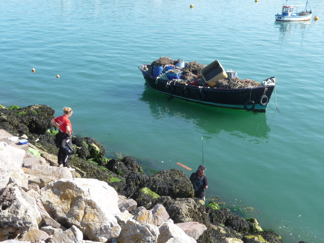 Brixham : Breakwater & Fishing