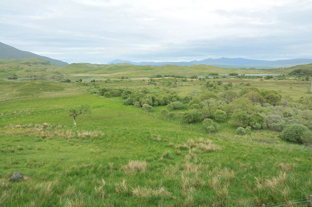 Tree scrubland near Kilchrenan