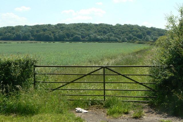 Field gate near Bradmore