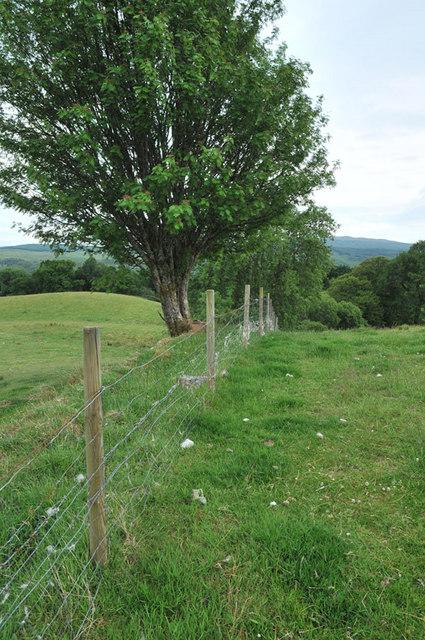 Fence marking a field edge near Loch Awe