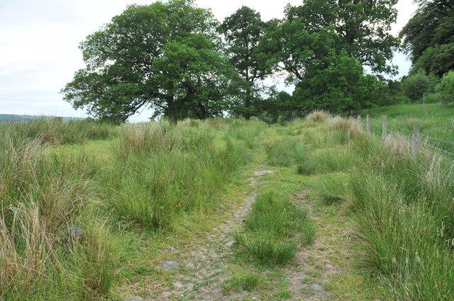 Farm track at Hayfield