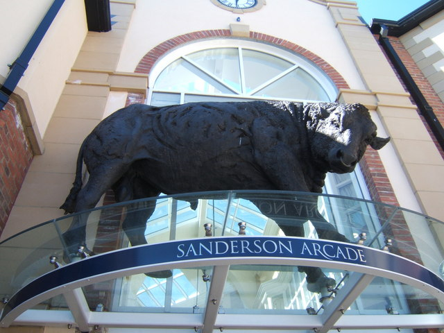 Bull - another view