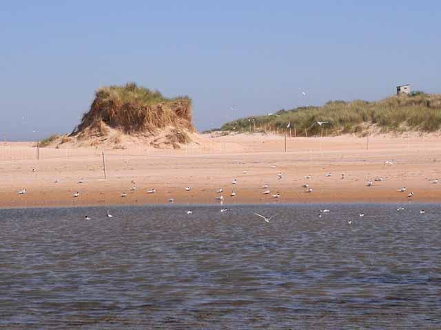 Tern colony, Beadnell Bay