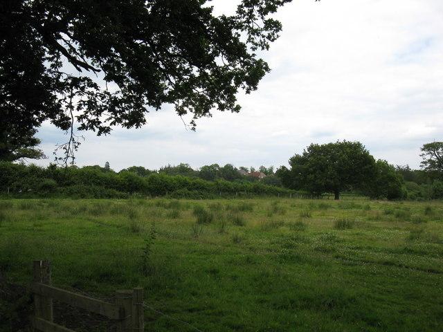 Rough pastureland