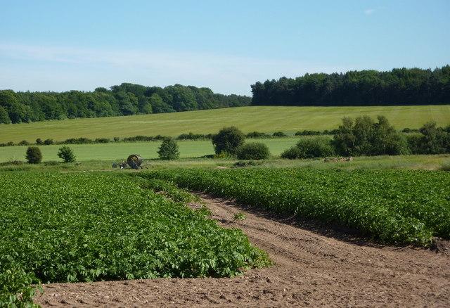 Farmland east of Hardwick village