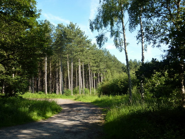 Forest glade near the Clumber Park Hotel