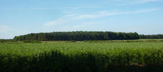 Fields and woodland east of the Clumber Park Hotel