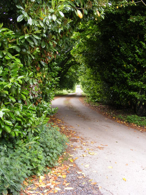 Roundabout Lane
