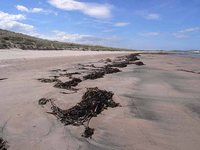 Line of seaweed in Beadnell Bay