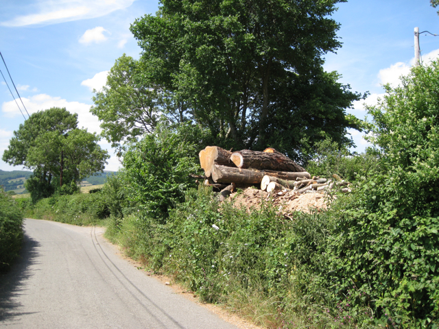 Recently-felled trees, Whistley Hill Cross