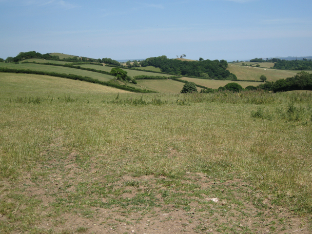 Grassland with nettles and thistles