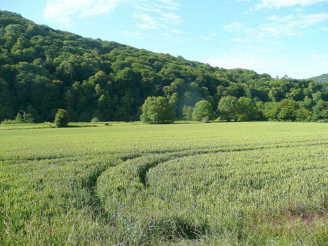 The Wye Valley south of Bigsweir