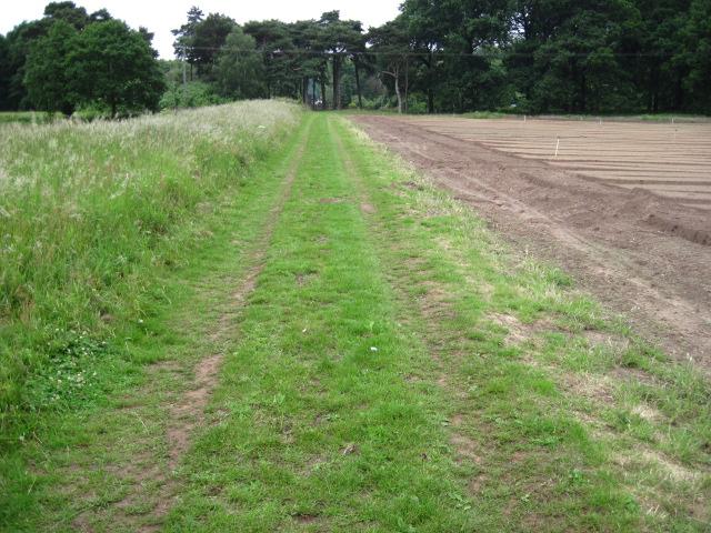 Robin Hood Way towards South Lodge