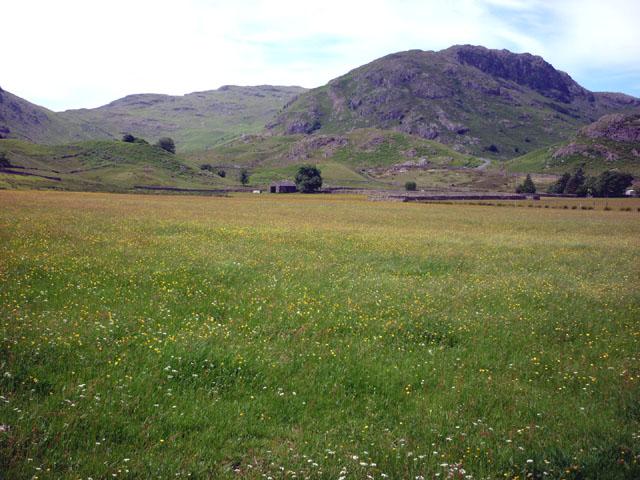 Meadow, Fell Foot, Little Langdale