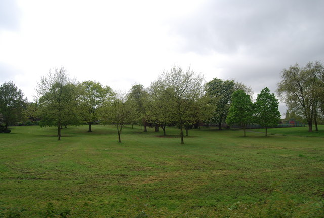 Trees, Upper Norwood Recreation Ground