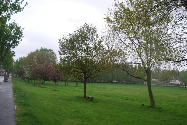Trees lining Upper Norwood Recreation Ground