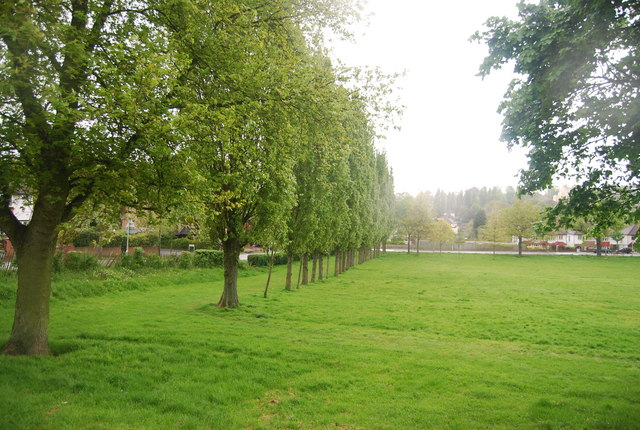 A line of trees, Upper Norwood Recreation Ground