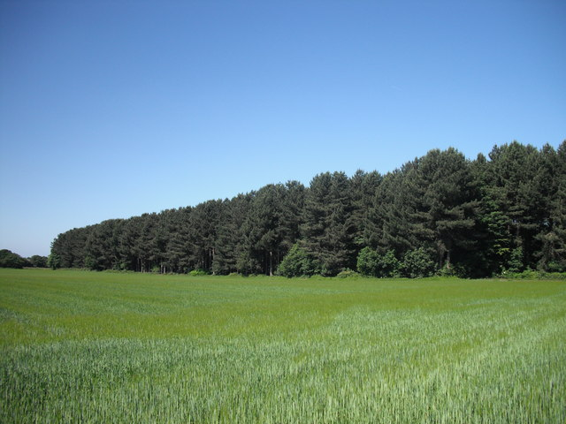 Sandy Lane plantation, Holt Green