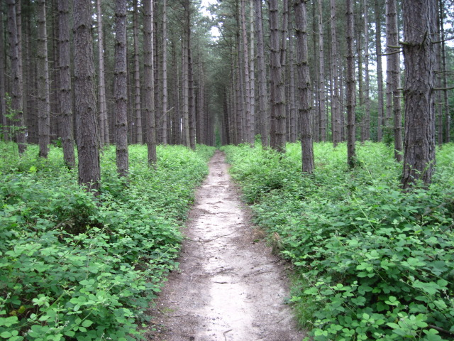 Path through forest near Old Coach Road