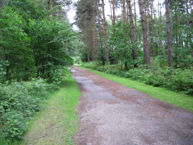 Route 6 in Clumber Park