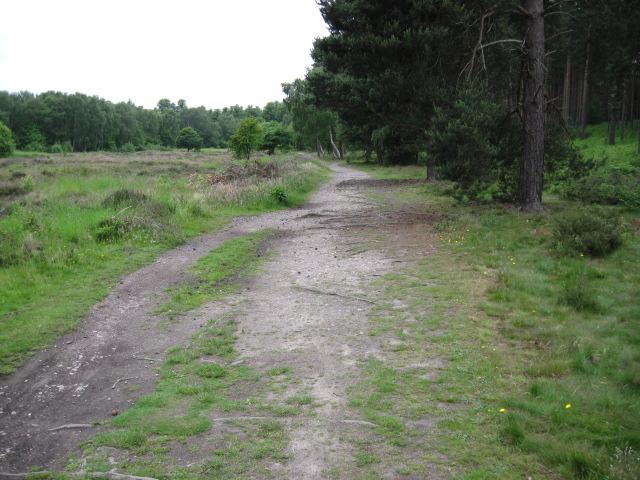Track in Hardwick Wood