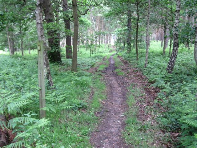 Footpath in Hardwick Wood