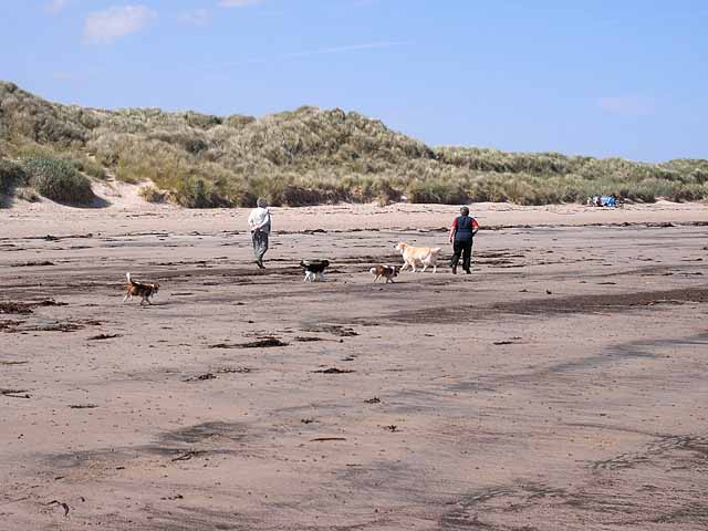 Dog walkers on the beach at Beadnell