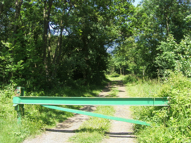Leckhampstead Wood