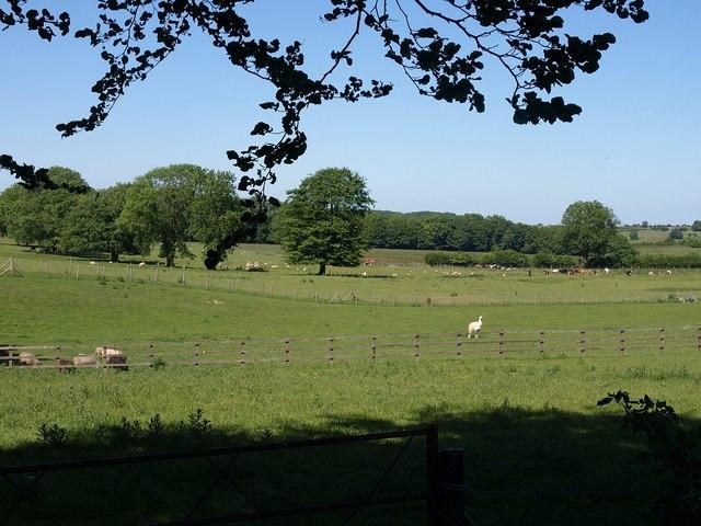 Near Priddy Road Farm