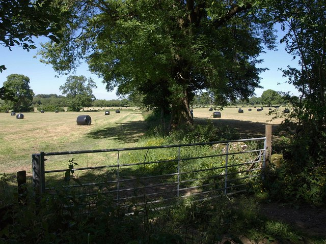 Field boundary by Priddy Road