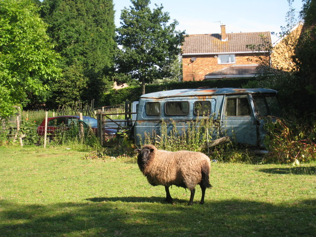 Sheep and Commer Minibus
