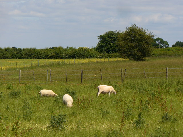 Sheep Grazing near Well