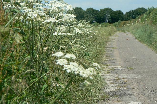 Track to Barn Farm