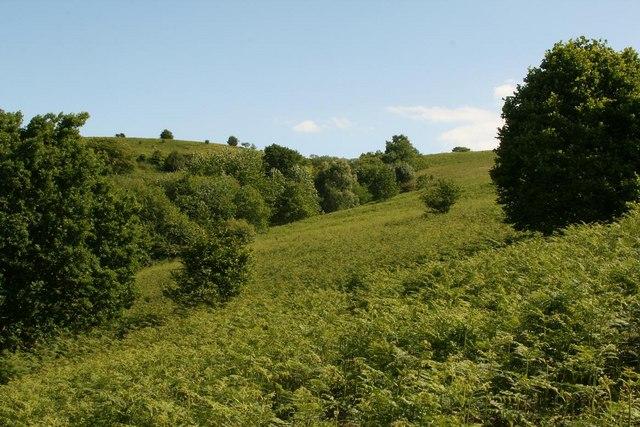 East Twin Brook upper valley