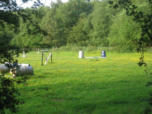 Horse jumps and buttercups