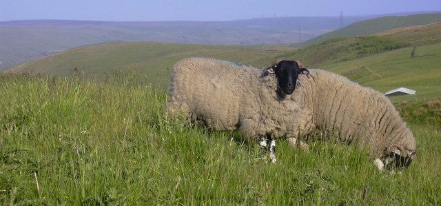 Moorland at Sharneyford