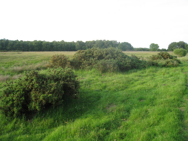 Scotton Common