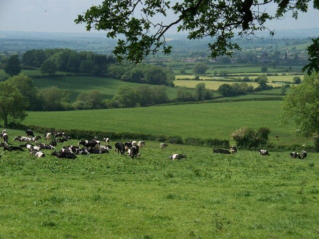 Bucolic Warwickshire