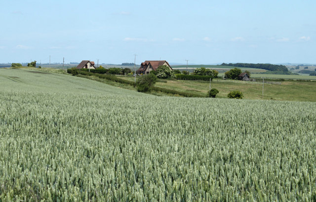 2010 : Wheatfield and bungalows on Whiten Hill
