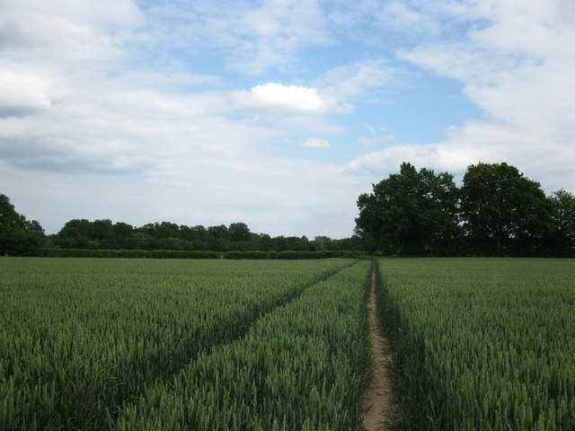 Path through the wheat