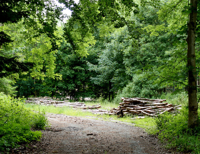 2010 : Harvested logs in Longleat Forest