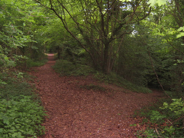 Woodland Trail junction in Yockletts Banks