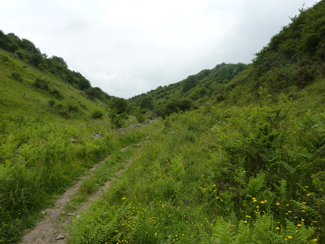 Ferns, flowers and trees, Gratton Dale