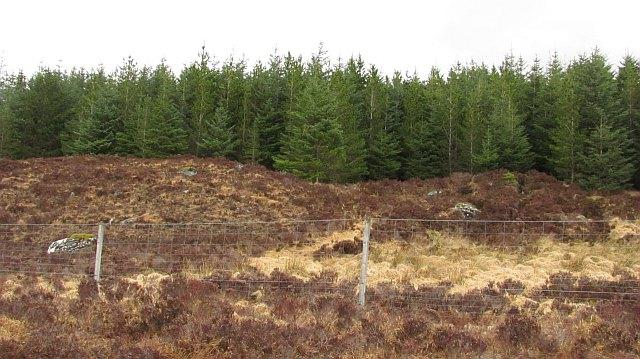 Forestry, Cnoc a' Ghriama