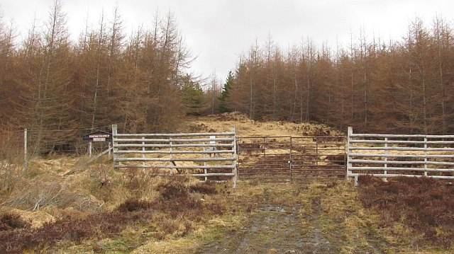 Forestry, Cnoc a' Ghriama