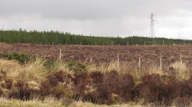 Forestry, Overscaig