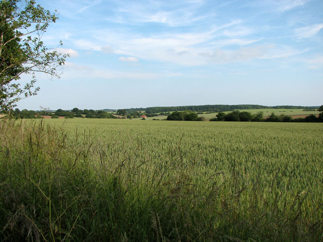Undulating fields north of Cookley Green